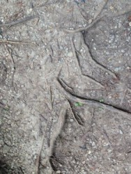A picture of the ground - the inspiration for my painting