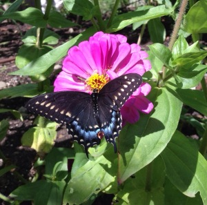 A butterfly on a pink flower